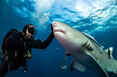 Sharks Love To Be Petted - They're Like Dogs