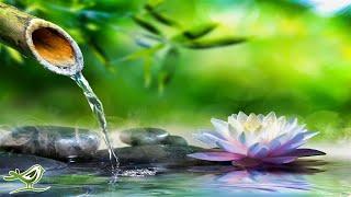Meditation / Relaxation
